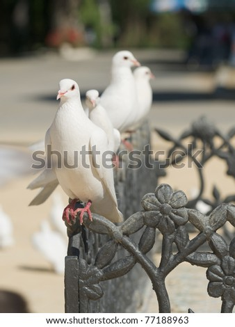 cute doves in the city - stock photo