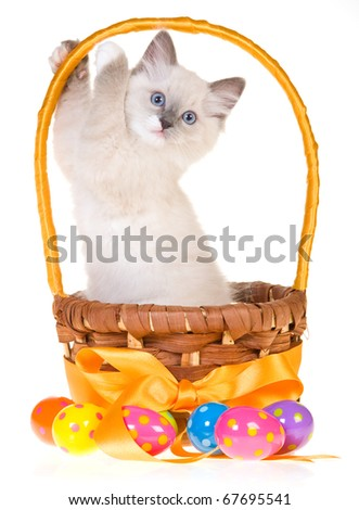Cute Easter kitten in basket with easter eggs