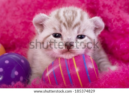 Cute Easter kitten on pink background with Easter eggs - stock photo