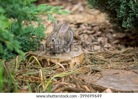 Cute easter rabbit sitting on stud in garden - stock photo