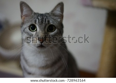 https://thumb7.shutterstock.com/display_pic_with_logo/167494286/728963164/stock-photo-cute-egyptian-mau-728963164.jpg