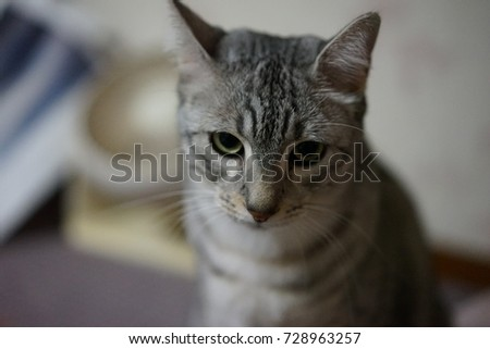 https://thumb7.shutterstock.com/display_pic_with_logo/167494286/728963257/stock-photo-cute-egyptian-mau-728963257.jpg