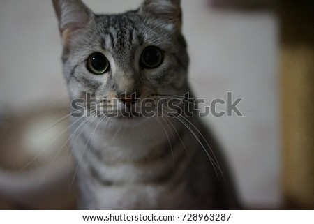https://thumb7.shutterstock.com/display_pic_with_logo/167494286/728963287/stock-photo-cute-egyptian-mau-728963287.jpg