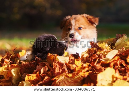 cute Elo puppies with autumn leaves - stock photo