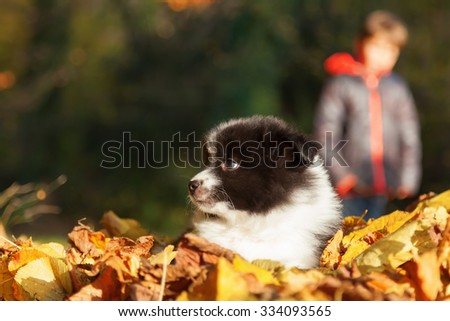 cute Elo puppy among yellow colored autumn leaves