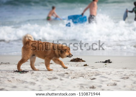 cute Elo puppy walks at the beach while children playing in the surf of the sea
