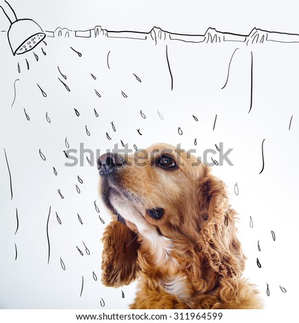 Cute English Cocker Spaniel puppy in front of a white background with shower courtain and water sketch. - stock photo