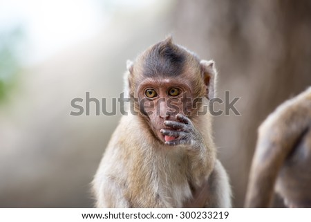 Cute face of asian baby monkey play in nature