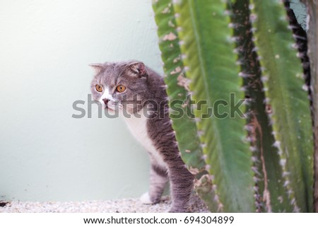 cute fat grey cat with green cactus look like hipster