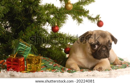 Dog Christmas Tree Stock Images, Royalty-Free Images & Vectors ...