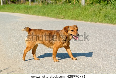 Cute female stray dog crossing the road. - stock photo