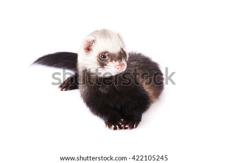 Cute ferret isolated on white background - stock photo