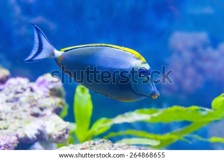 cute fish in an aquarium. Park. Donetsk. Ukraine - stock photo