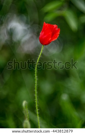 Cute flower Amazing flower.  - stock photo