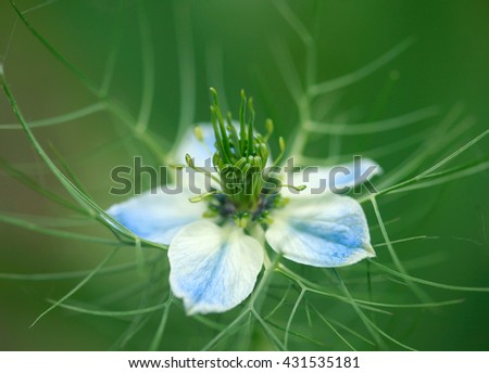 cute flower on green background - stock photo