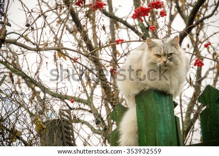 Cute fluffy cat and rowan berries in the garden. - stock photo