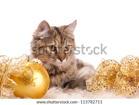 cute fluffy cat and yellow christmas decoration on white background - stock photo