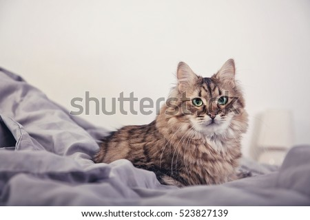 Cute fluffy cat lying in the bed