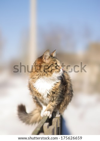 cute fluffy cat sitting on a fence in winter - stock photo
