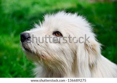 Cute fluffy dog sitting on a grass
