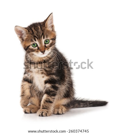 Cute fluffy kitten isolated on white background - stock photo