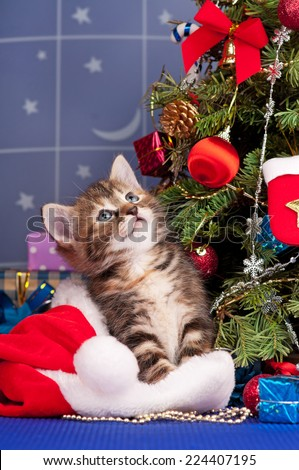 Cute fluffy kitten near Christmas spruce with gifts and toys - stock photo