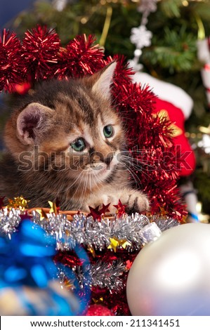 Cute fluffy kitten near Christmas spruce with gifts and toys close up - stock photo