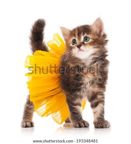 Cute fluffy kitten posing dressed in the tutu over white background - stock photo