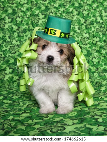 Cute fluffy puppy on irish shamrock background with st patricks day hat and ribbons on head - stock photo