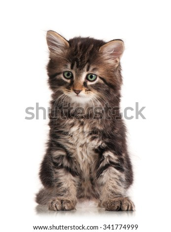 Cute fluffy siberian kitten isolated on a white background cutout - stock photo