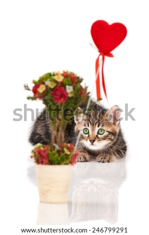 Cute fluffy siberian kitten with a bouquet in the foreground over white background. Focus on the kitten