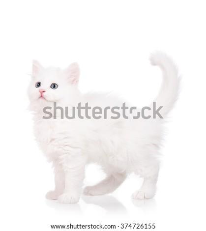 Cute fluffy white kitten isolated over white background - stock photo