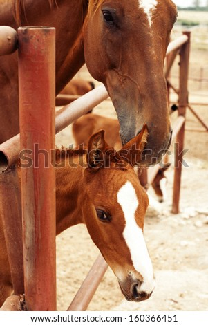 Cute foal with mare - stock photo