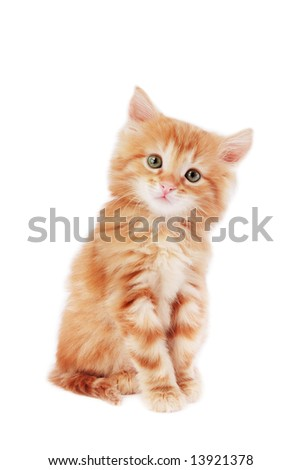 Cute foxy-red kitten sitting on white background