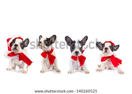 Cute french bulldog puppies with red ribbon - stock photo