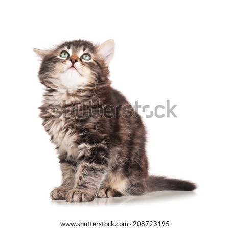 Cute frightened kitten isolated on white background - stock photo