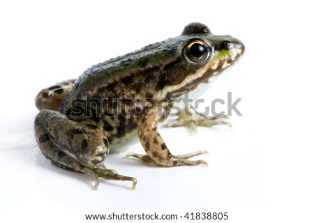 Cute frog - stock photo