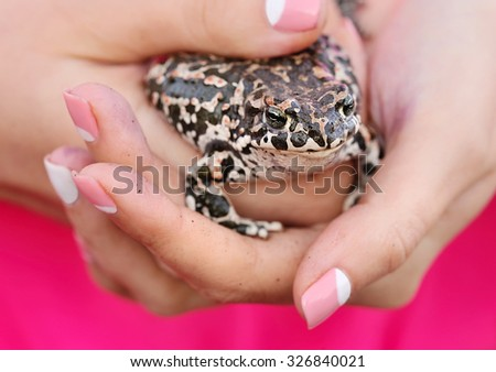 Cute frog on female hands - stock photo