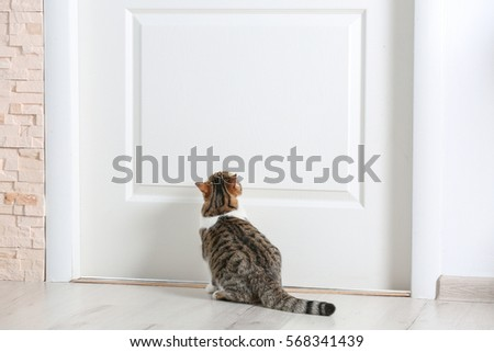 Cute funny cat near door at home & Cat Door Stock Images Royalty-Free Images \u0026 Vectors | Shutterstock Pezcame.Com