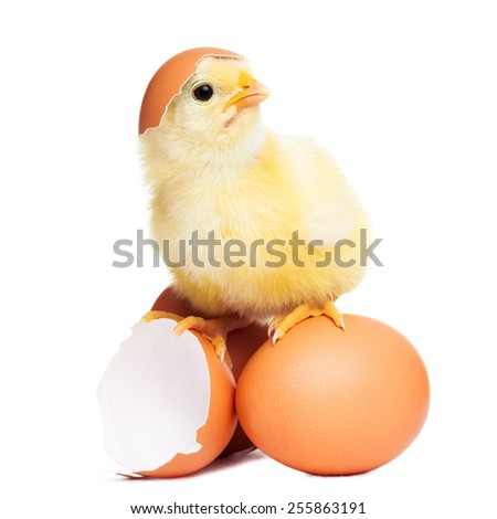 Cute funny easter chick - stock photo