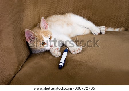 cute funny little fluffy kitten lies on a background of playing with pen.  - stock photo
