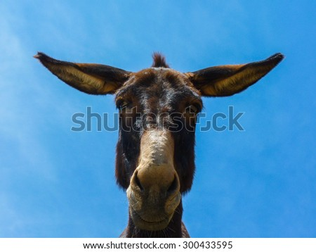 Cute funny mule in Naxos island, Cyclades, Greece - stock photo