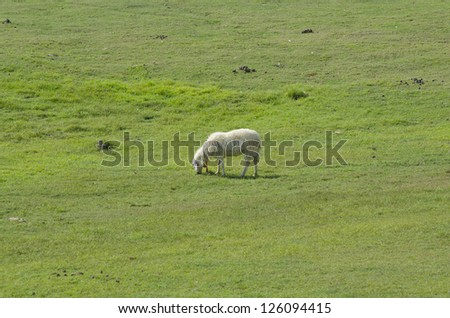 Cute funny sheep or lamb in green meadow - stock photo