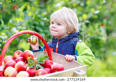 Cute funny toddler boy pushing wooden trolley with red apples and eating fruits. Happy kid on autumn day in an orchard. Family harvesting together. - stock photo
