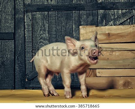 Cute funny young small pink piglet pet standing near box indoor in studio on wooden backgroumd, horizontal picture - stock photo