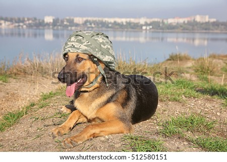 Download German Shepherds Army Adorable Dog - stock-photo-cute-german-shepherd-dog-with-military-helmet-lying-on-river-bank-512580151  Picture_898298  .jpg