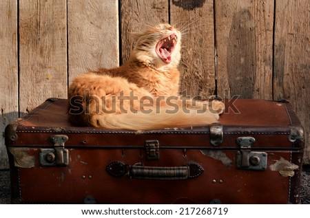 Cute ginger cat awakening on old suitcase - stock photo