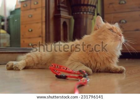 Cute ginger cat lying on floor - stock photo