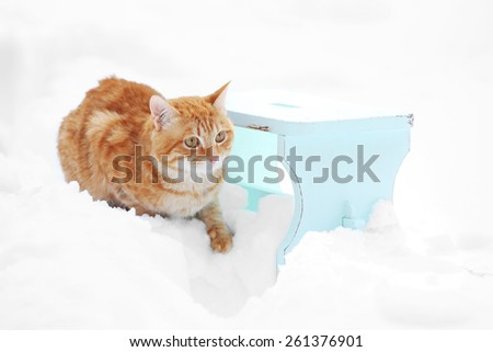 Cute ginger cat on color wooden stool on snow background - stock photo