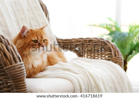 Cute ginger cat on wicker chair - stock photo